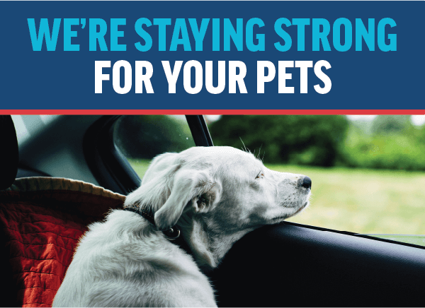 Staying Strong For Your Pets