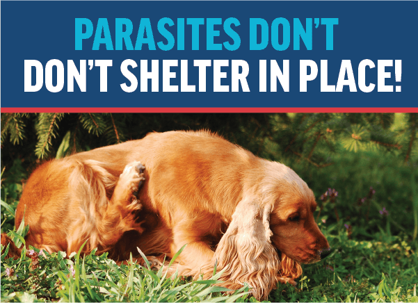 Parasites Don't Shelter-in-Place