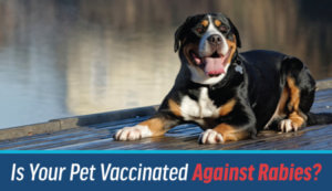 Rabies Vaccines | Animal Medical Center of Cascades
