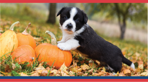 Steps to Keep Your Pet Safer Than the Turkey