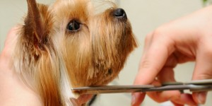 Pet Grooming in Sterling, VA