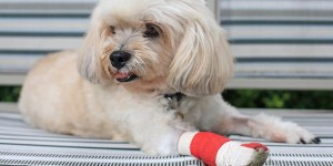Pet Surgery Sterling, VA