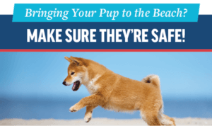Beach Safety Tips for Your Pet