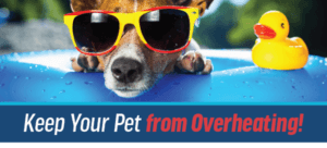 Hot Weather Safety For Pets