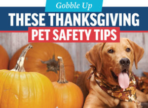 Thanksgiving Pet Safety | Animal Medical Center of Cacades
