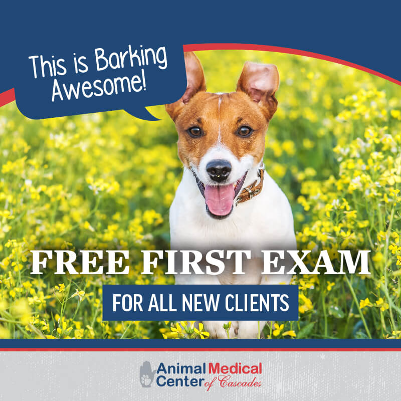 Free First Exam for All New Clients | Animal Medical Center of the Cascades