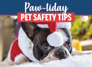 Holiday Pet Safety Tips   Animal Medical Center of Cascades