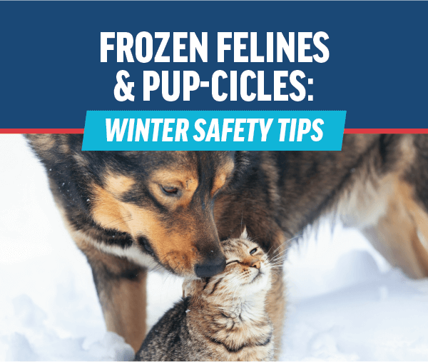Frozen Felines & Pup-cicles: Winter Safety Tips