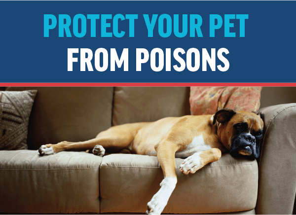 Protect Your Pet From Poisons