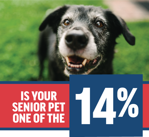 Is Your Senior Pet One of the 14%?