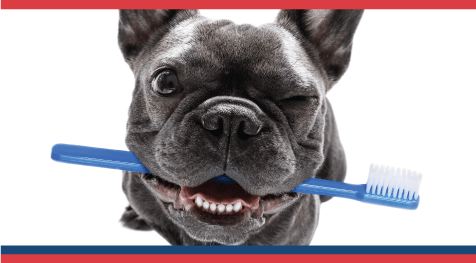Happy National Pet Dental Health Month!