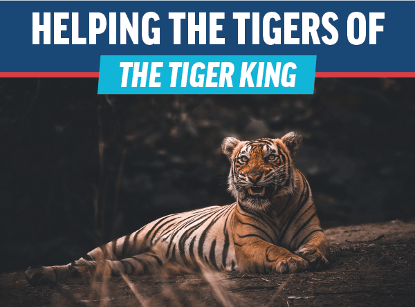 Did You Watch the Tiger King? Read This!